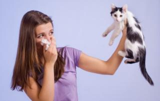 Bild: allergic to cat © Evgenia Tiplyashina / fotolia