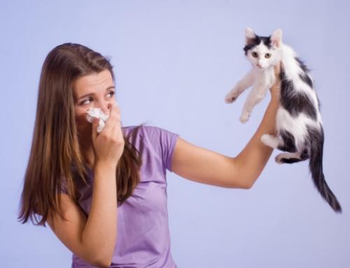 Kann Dich eine Allergie Deine Ausbildung kosten?